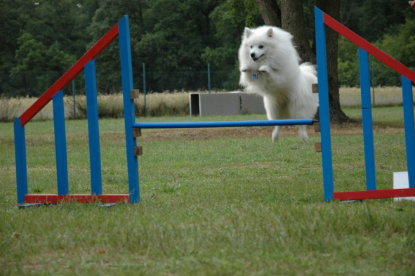 Agility is fun!!!